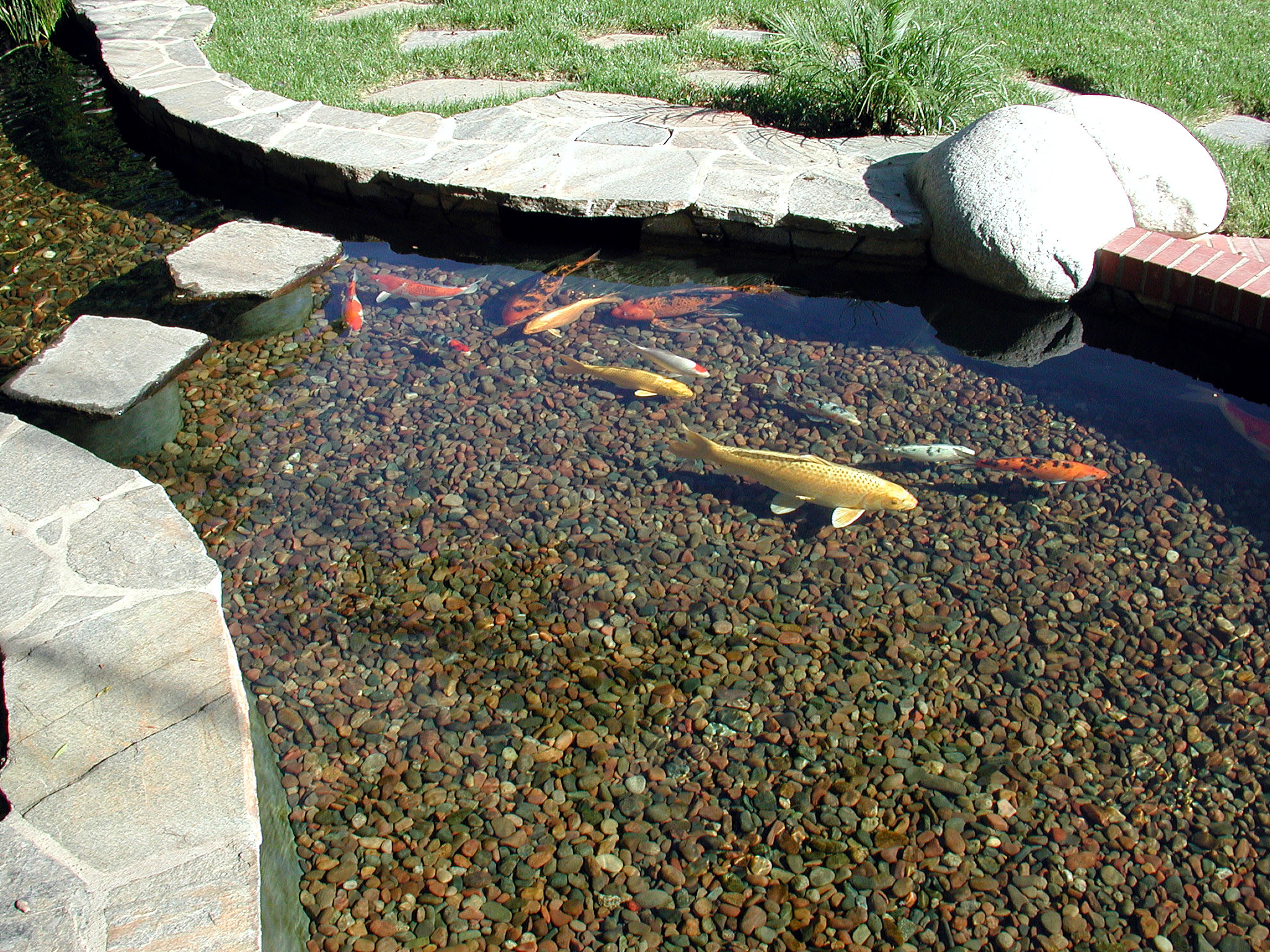 Professional koi pond construction and repair in pasadena for Koi pond contractors